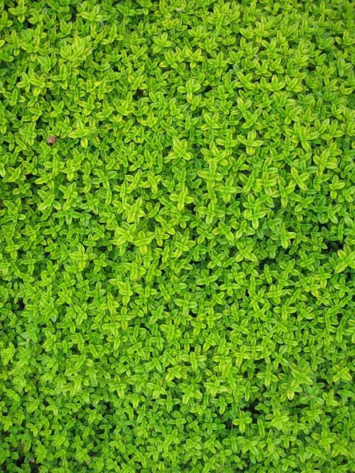 wall garden leaves plants